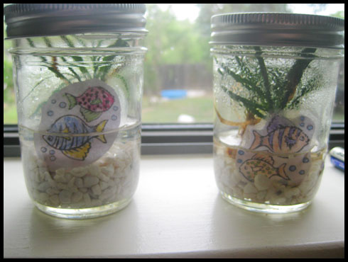 """Aquariums"" in Mason Jars"