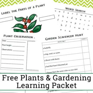 Free Garden and Plant Worksheets for Kindergarten - 2nd Grade. This plant learning packet features a plant observation journal page, plant labeling, a garden scavenger hunt, a garden and plant themed word search, and more.