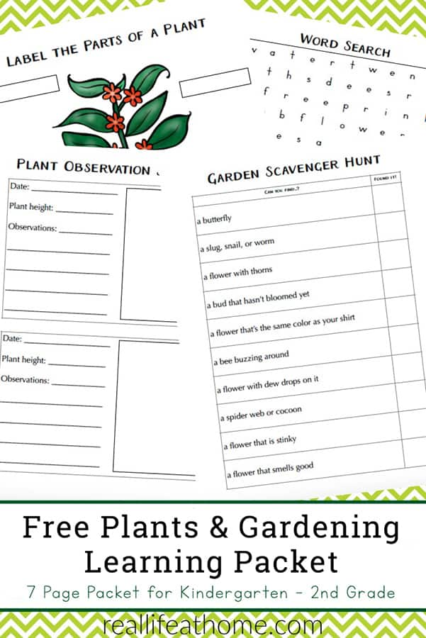 Free Garden and Plant Worksheets for Kindergarten - 2nd Grade - featuring a plant observation journal page, plant labeling, a garden scavenger hunt, and more